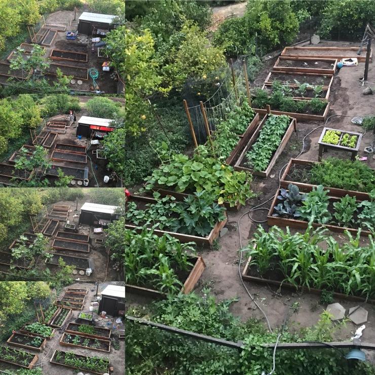 Juju Paradise Garden